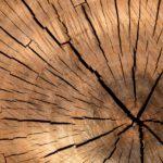 Waarom het verstandig is om te kiezen om te bouwen met hout